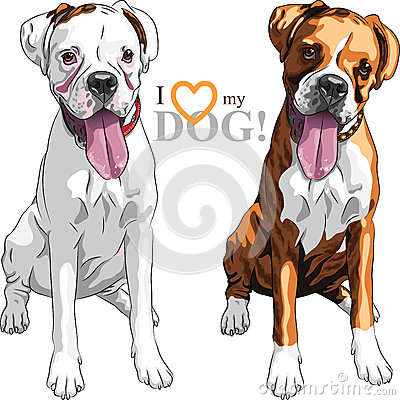 Vector sketch two domestic dog Boxer breed