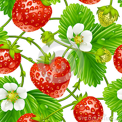 Vector strawberry seamless pattern on white backgr