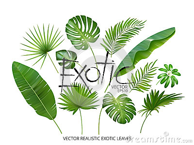 Vector tropical exotic leaves, realistic jungle leaves set isolated on white background. Palm leaf collection. Quality Vector Illustration