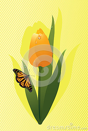 vector tulip and a butterfly