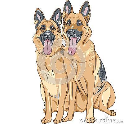 vector Two dog German shepherd breed
