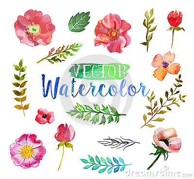 Free Vector Watercolor Aquarelle Flowers And Leaves. Royalty Free Stock Photos - 56161678
