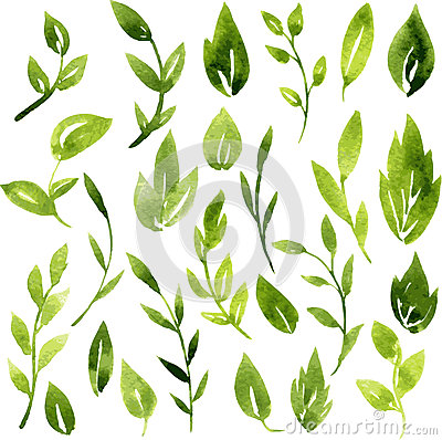 Free Vector Watercolor Green Leaves And Branches Royalty Free Stock Photos - 51476368