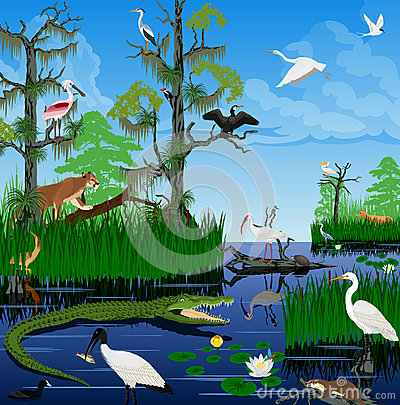 Vector wetland Pantanal Everglades landscape with animals Vector Illustration