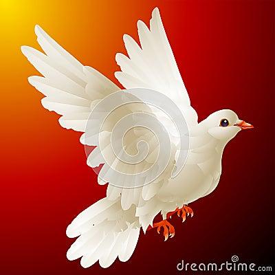 Vector white dove