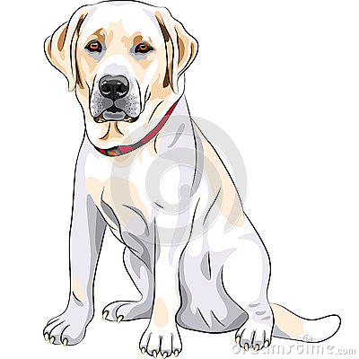 Free Vector Yellow Dog Breed Labrador Retriever Sitting Royalty Free Stock Photo - 25953035