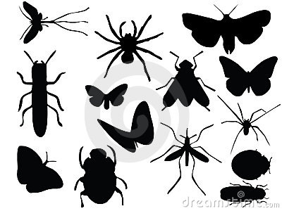 Vectors of insects