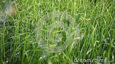 Veel zeepbels, vlieg en land op het lange groene gras, op een Zonnige dag stock videobeelden