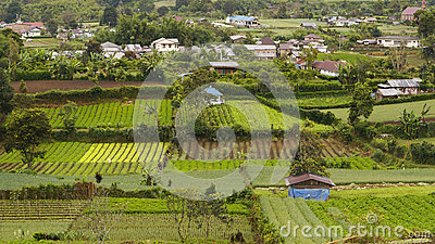 Vegetable farms in Gundaling, Brastagi, Indonesia