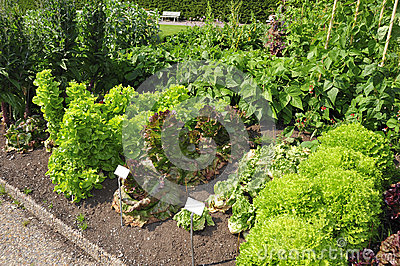 Vegetable Garden Stock Photography - Image: 26777182