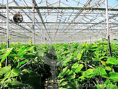 Vegetable greenhouses in Agricultural Park