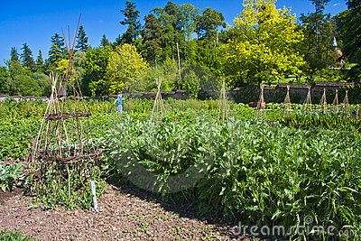 Vegetable kitchen garden