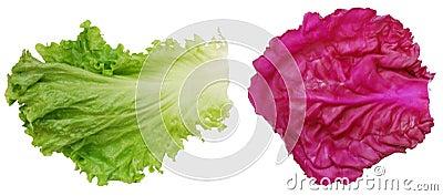 Vegetable leafs
