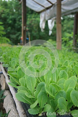 Vegetable organic 09