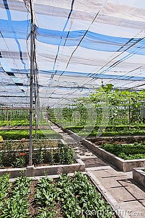 Vegetable shed
