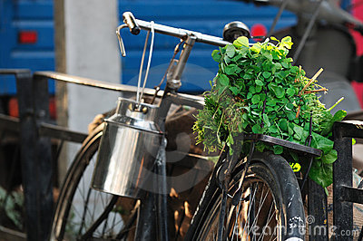 Vegetables on bike