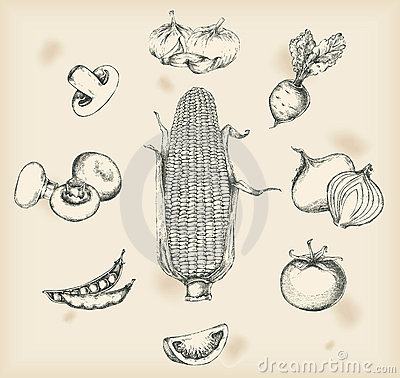 Vegetables drawing- isolated objects