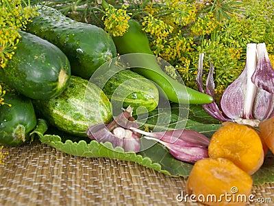 Vegetables for ferment