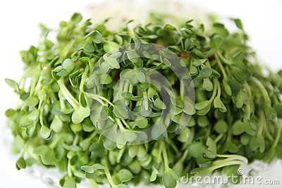 A vegetables food  japan.