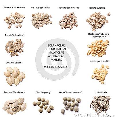 Free Vegetables Seeds- Different Varieties Stock Photo - 35337730