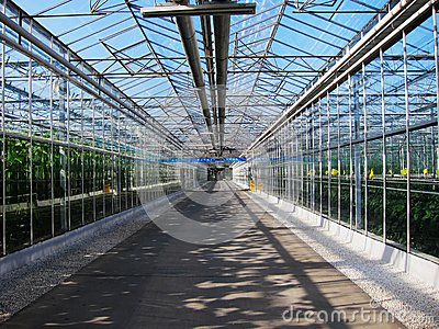 Vegetables tourist glass corridor in greenhouses