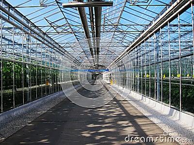 Vegetables tourist glass corridor in greenhouses
