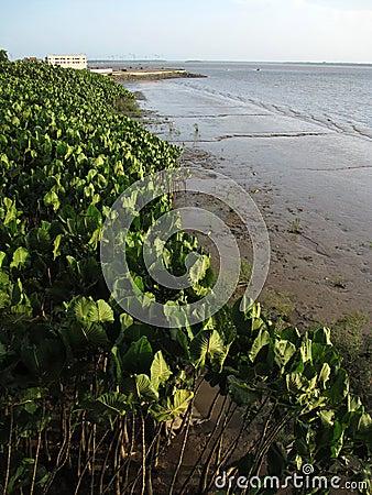 Vegetation bay