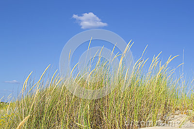Vegetation blown by the wind