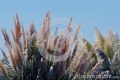 Vegetation in desert