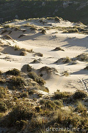 Vegetation on dunes