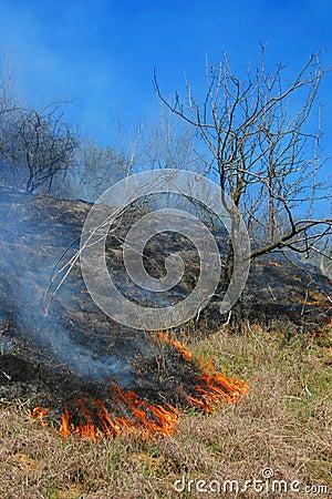 Vegetation fire