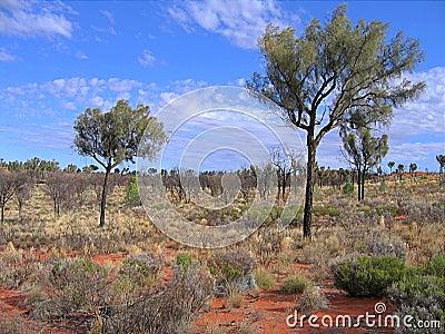 Vegetation in the red sand of desert Editorial Stock Image