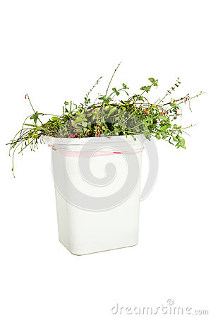 Vegetation in trash can