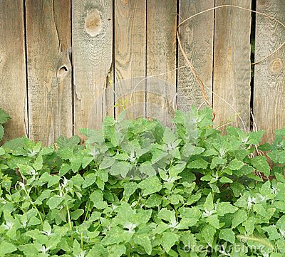 Vegetation and wooden fence