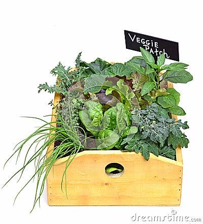 Veggie planter