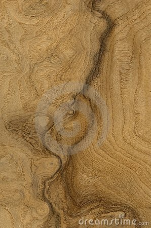 Vein of the wood
