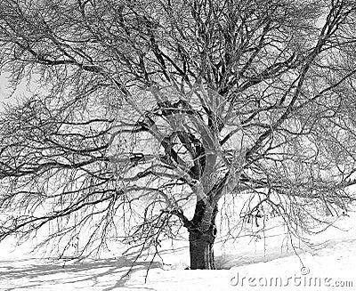 Veins зима
