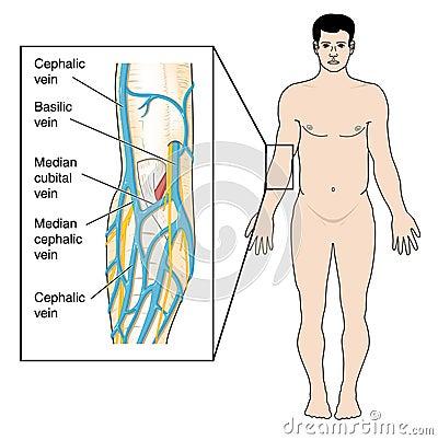 Blue Vein On Leg - Doctor insights on HealthTap