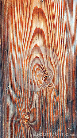 Veins on wood