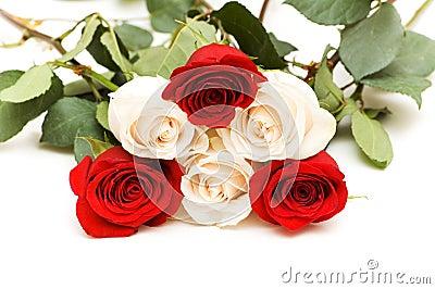 Vele rozen die op de witte achtergrond worden geïsoleerd