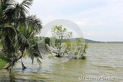Vellayani lakes