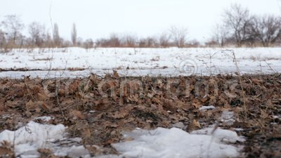 Vent et feuilles de champ d'hiver clips vidéos