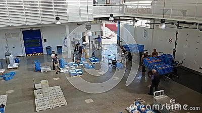 Vente aux enchères de poissons Blanes, Espagne Conteneurs sur le convoyeur banque de vidéos