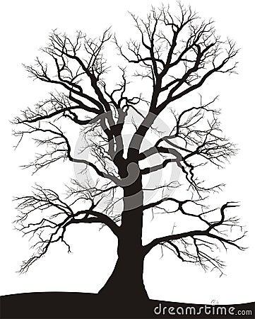 Verano del roble del árbol