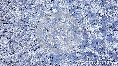 Verbazend de winterbos boven de bomenbovenkanten Mooi de winterlandscape Zeer mooie de wintervideo stock footage