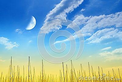 Verbazende hemel over de pijler