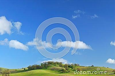 Verdant hillside