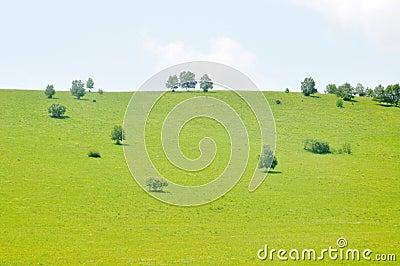 Verdant pasture and tree