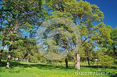 Verdant spring landscape