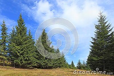 Verde di foresta